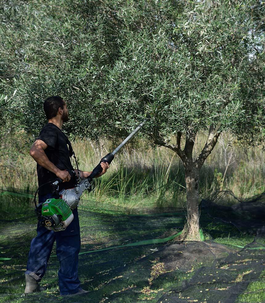 Bioporos organic farm olive trees