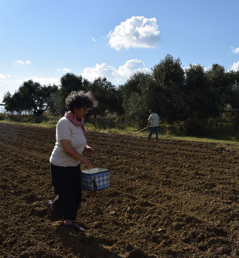 about Bioporos Organic Farm activities
