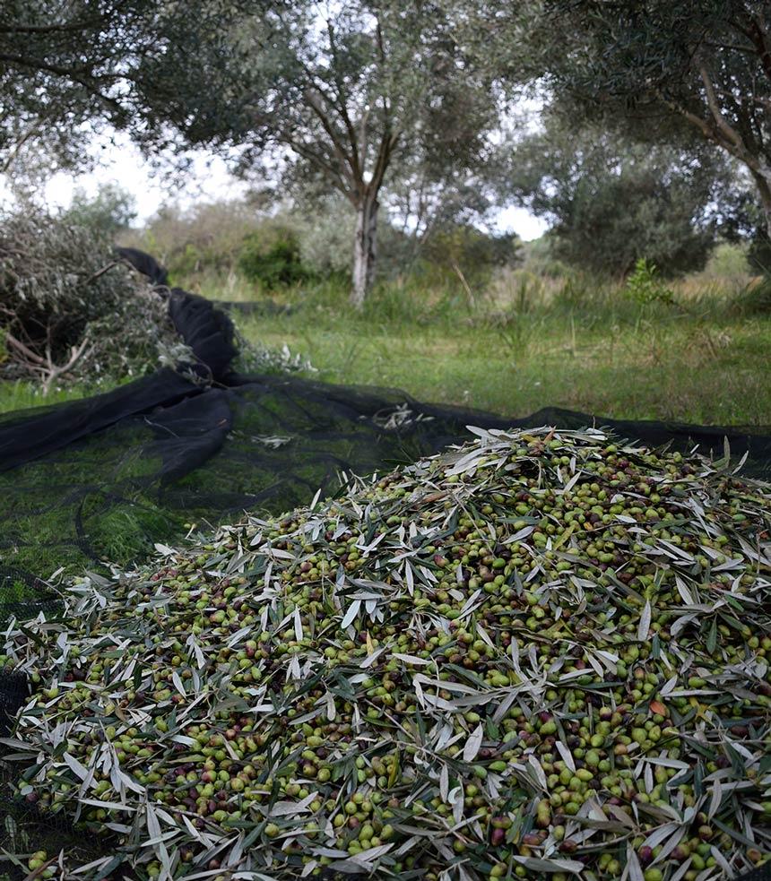 Bioporos Organic Farm Olive Groves