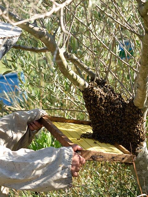 Bioporos Organic Farm Beekeeping