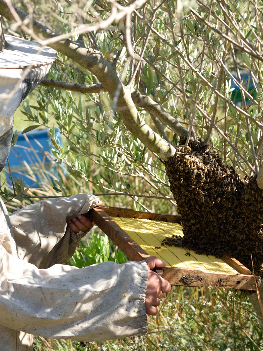 Bioporos Organic Farm beekeeping activities